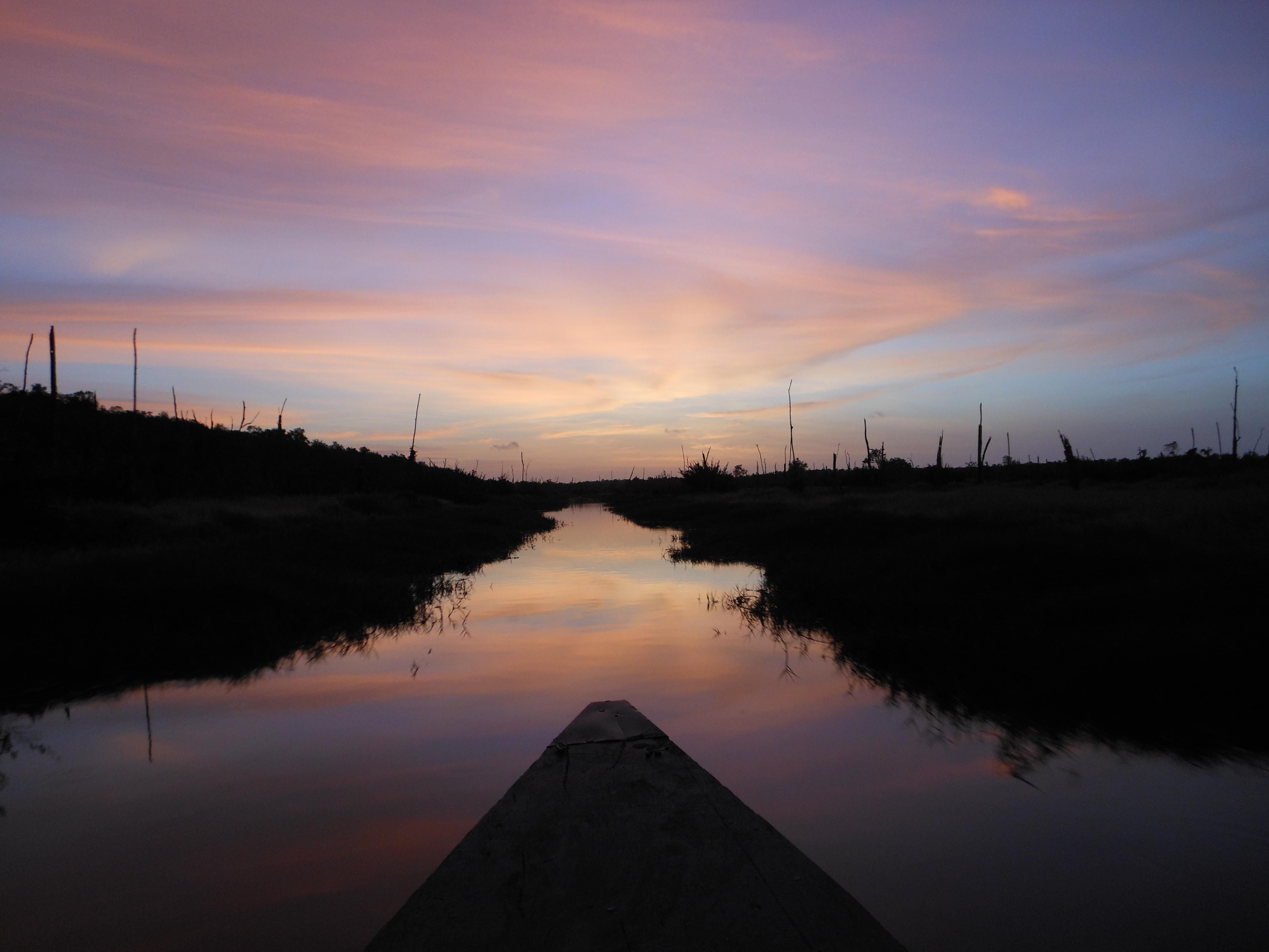 Suriname Blog #4: Bakra's in the swamp
